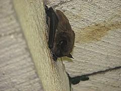 Holy Bat, uh, Batman