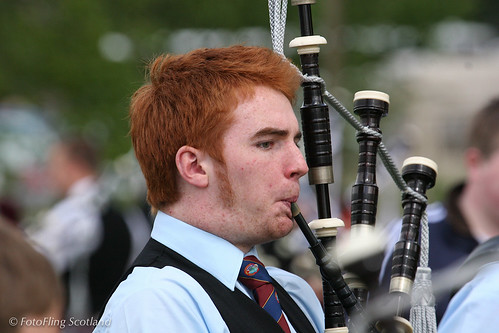 Ginger Piper