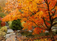 My Secret Garden (avirus) Tags: autumn red tree nature water beauty leaves yellow garden maple path falling clor