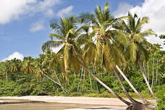 La Sagesse Palms (SunCat) Tags: travel vacation beach all grenada caribbean 2007 lasagesse