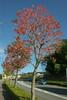 街路樹を染める
