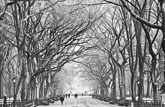 December in Central Park (Thomas Hawk) Tags: bw manhattan newyork newyorkcity nyc snow ice tree trees centralpark hesback thomasreturns superfave 10 fav10 fav25 lined walkway snowy park delete save save2 save3 save4 save5 save6 save7 delete2 save8 save9 delete3 delete4 delete5 save10 savedbythedeletemeuncensoredgroup usa unitedstates unitedstatesofamerica blackwhite blackandwhite petapixel fav20 fav30 fav40 fav50 fav60 fav70 fav80 fav90 fav100