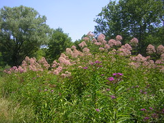 DSCN1220 (alle_alleb) Tags: flowers summer dogs butterflies indiana fields trips