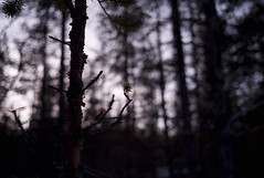 audible silence (futureancient) Tags: forest 35mm dark moody sweden bokeh summicron atmospheric jukkasjarvi wideopen deepforest f20 leicam8 futureancient givesyoureyesthechills