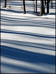 Les ombres ( CHRISTIAN ) Tags: trees winter snow nature forest shadows quebec hiver explore arbres qubec neige fort laurentides stcalixte ombres supershot instantfave anawesomeshot ultimateshot superbmasterpiece diamondclassphotographer flickrdiamond