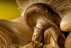 Still life (Calendar) Mushroom (MadsMonsen) Tags: stilllife food mushroom studio madsmonsen