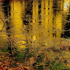 My Wild River Of Gold!!! (Denis Collette...!!!) Tags: camera canada reflection bravo quebec sting happiness perfection themoulinrouge portneuf fineartphotos artlibre anawesomeshot colorphotoaward impressedbeauty ultimateshot pontrouge goldenphotographer diamondclassphotographer flickrdiamond deniscollette overtheexcellence wildriver world100f venkane hereandnow natureselegantshots exploredbycalyn explorewinnersoftheworld tofollowthelight fieldsofgold waitingforidealconditions dreamofparadise rightinthemiddle totakethetrainrunning liveincredit tolivetomorrow acompletenonsense afterthedeath notimetolost thenonreality