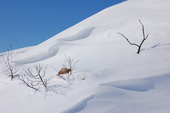 White dunes (focuspocus) Tags: blue winter sky sun white snow athens greece february 2008 penteli pendeli nikond40 pedeli focuspocus