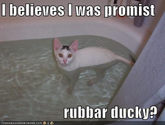 funny-pictures-white-cat-bath-ducky