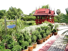 plants center thailand09