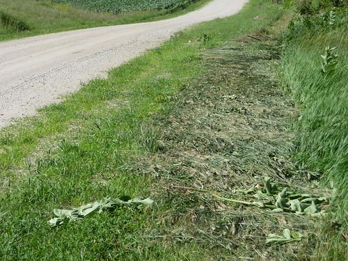 Mowed Road....