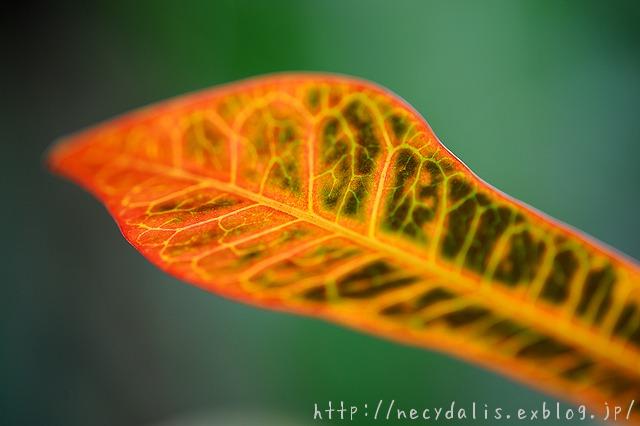 Leaf...