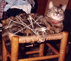 Emily all tied up (bryanilona) Tags: wool kitten stool familylife familypet splendiferous supershot outstandingshots goldenmix abigfave platinumphoto anawesomeshot isawyoufirst wowiekazowie diamondclassphotographer flickrdiamond pet100 wonderfulworldmix allnicethink theperfectphotographer goldstaraward