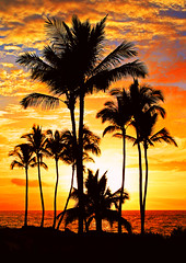 Red Hot Sunset (janruss) Tags: sunset hot redhot palms palmtrees catchycolorsorange catchycolors colour coloursplosion vivid jalalspagesnaturealbum sun goldstaraward goldstarawardgoldmedalwinner vividmasters goldmedalwinner artlegacy thebestofgodscreation worldbest thebigone colourartaward interestingness1stnov2007421 i500 breathtaking amazingtalent takeabow goldenmix elegantgroup thebestvivid anawesomeshot betterthangood 50faves flickrdiamond diamondclassphotographer flickrplatinum goldenphotographer anthonycolor golddragon diamondphotographer 75faves cotcmostinteresting explore 5photosaday picturesque alemdagqualityonlyclub world100f flickrlovers theroadtoheaven lifebeautiful colorphotoaward colorphotoawardbronze 100commentgroup breathtakinggoldaward colorphotoawardsilver janruss janinerussell bestofmywinners newgoldenseal breathtakinghalloffame artistoftheyearlevel6 artistoftheyearlevel5 artistoftheyearlevel4 artistoftheyearlevel3