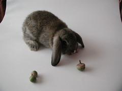 p1010016 (fgernst) Tags: pets bunnies animals rabbits