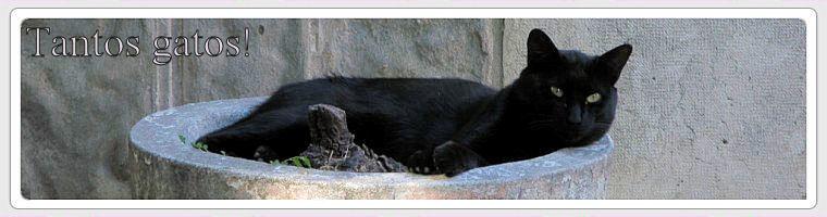 TNR no nosso bairro - Um gato de cada vez talvez faça alguma diferença ...