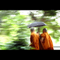 monks in the move (Yorick...) Tags: orange blur green rain monks panning