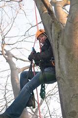 Climbing up (jos47) Tags: treeclimbing