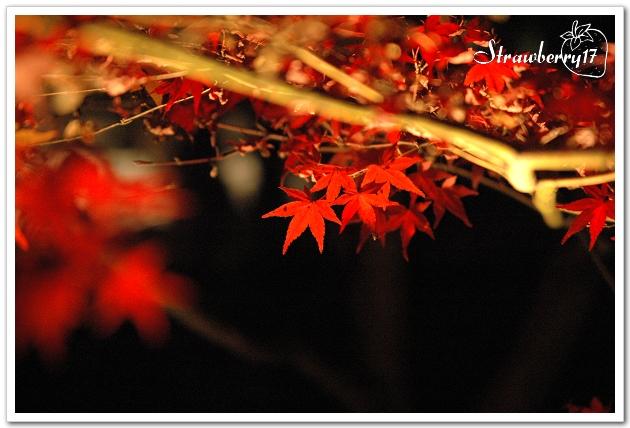 20071121京都永觀堂夜楓(23)