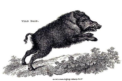 wildboarart