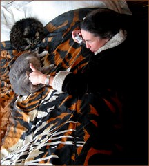 Jennifer with Bach and Brandi (spincast1123) Tags: winter sleeping orange cats white black digital person photography photo interesting flickr jen image jennifer tiger gray picture bach photograph felines brandi electronic digitalphoto digitalphotography copywrite wowiekazowie jensphotography onlythebestare spincast1123 electronicimage copywriteprotected