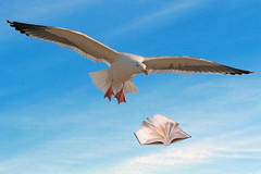 Learn To Fly (flopper) Tags: book fly seagull flight creative learn jonathanlivingston interestingness69 interestingness308 interestingness85 interestingness172
