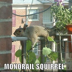 monorail squirrel ((     )) Tags: cat funny lol can has cheezburger lolcats lolcode