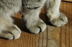 Febrer 2008 058 Els tres peus del gat... (visol) Tags: cat patas gata pattes chatte potes mixa