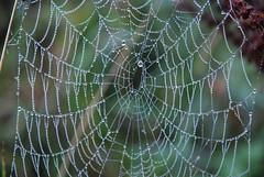Web (mick dunne) Tags: morning ireland rain rural spider nikon sigma cobweb dew morningdew sigma1020 nikond80 mickdunne