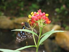 IMG_0650 (clare.teoh) Tags: cameronhighlands floraandfauna