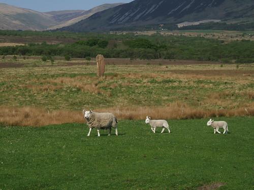 Machrie Moor Staines 1