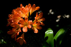 light (nosha) Tags: flower nature beauty searchthebest natural duke naturallight explore greenhouse 2008 horticulture destroyed dukegardens dorisduke nosha explored ddcf savedukegardens noshalikes dorisdukecharitablefoundation joanesperopresident nannerlokeohanechair johnjmackvicechair harrybdemopoulos anthonysfauci jamesfgill annehawley peteranadosy williamhschlesinger johnhtwilson johnezuccotti