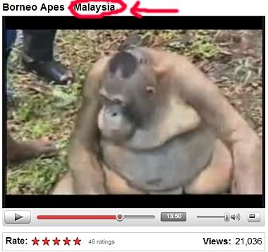 orang outan prostituée video