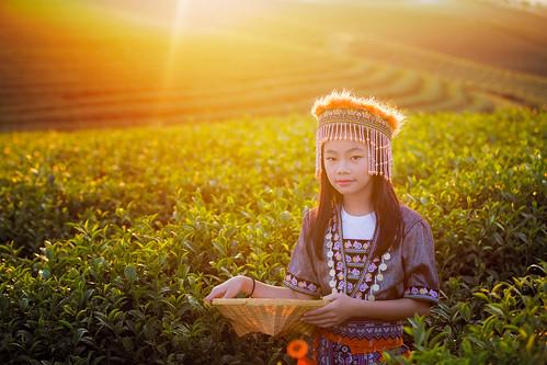 Kid and Green tea field in shui fong
