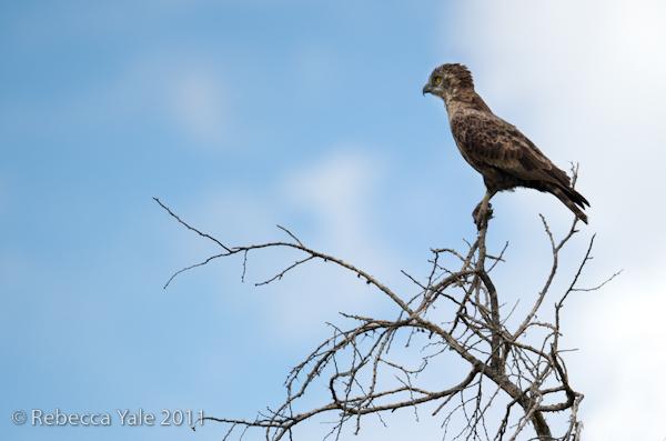RYALE_Rwanda_Uganda_Safari-187