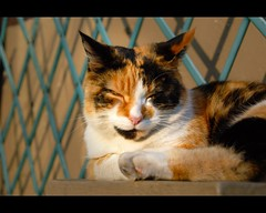 The last warm rays of light (federico-69) Tags: ireland cat cork cobh soe shieldofexcellence isawyoufirst federicopedroletti