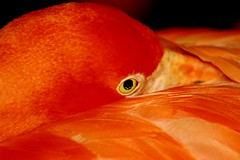 Are You Looking At Me? (mohammadali) Tags: pet canada birds animal mall zoo photo edmonton flamingo explore alberta 2007 thefunhouse     firsttheearth photoexplore