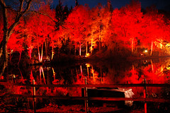 flaming (only alice) Tags: birthday wood light red orange night forest dark lights scotland october colours perthshire enchantedforest pitlochry faskally faskallywood theenchantedforest onlyalice