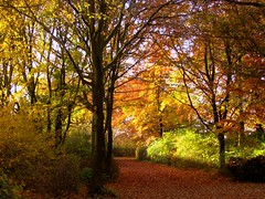 novembermorgen (elbfoto) Tags: autumn nature colors germany hamburg herbst natur hh farben naturesfinest supershot anawesomeshot diamondclassphotographer f