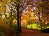 novembermorgen (elbfoto) Tags: autumn nature colors germany hamburg herbst natur hh farben naturesfinest supershot anawesomeshot diamondclassphotographer flickrdiamond megashot brillianteyejewel jeanny'sfoto thegoldenmermaid