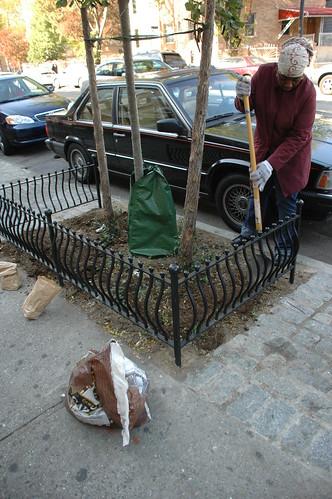 Tree Pit Planting