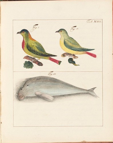 Asian birds and stylised whale