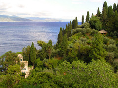 Cypresses stretches right down to the sea (Bn) Tags: sea vacation holiday tree beautiful forest photography bay italia liguria passion cypress traveling portofino cypresses italianriviera ligure outstandingshots passionphotography abigfave superbmasterpiece wowiekazowie diamondclassphotographer ishflickr