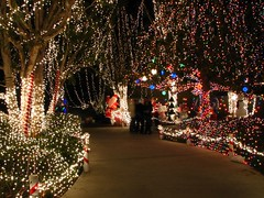 Enchanted Christmas Forest (Boonlong1) Tags: christmas longexposure holiday forest lights nightshot christmaslights christmasdecorations enchanted earthnight colorsofthenight