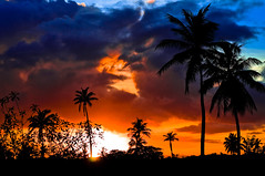 Tobago has the best sunsets. (Rygood) Tags: sunset interesting nikon carribean palmtrees trinidad lime nomansland tobago d300 limin nikkor2870f28 gettysubmission