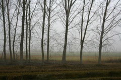 Autostrada (galadh_007) Tags: canon nebbia inverno autostrada aplusphoto