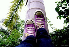 A day in the life (Honey Pie!) Tags: shoes converse ps allstar amora chucktaylor lilas tnis cybershotdscs650