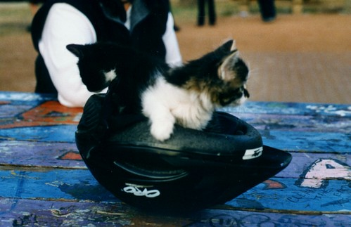 Kittens in a bicycle helmet.