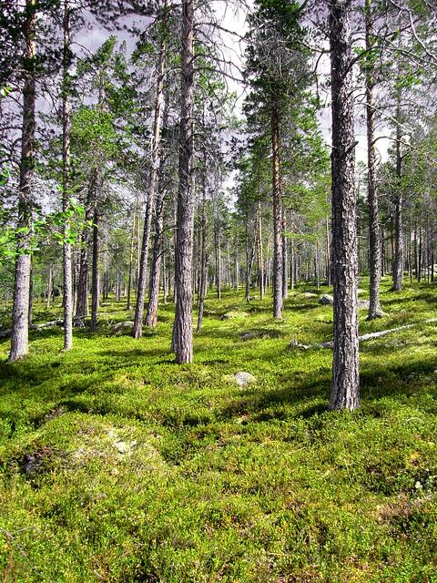 2350276915 09840bc05b z Zahradní dřevěný nábytek – švédská borovice