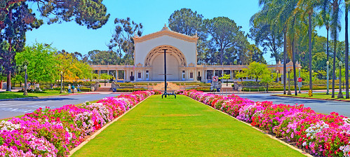 Spreckels Organ Pavilion & Beautiful Geraniums
